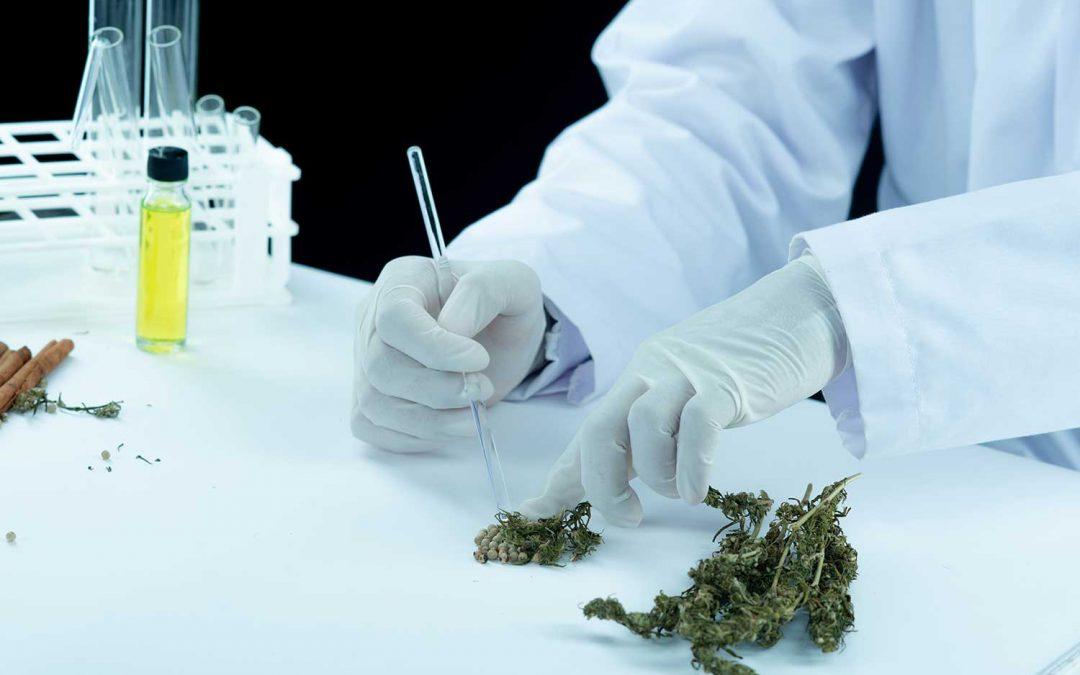 En qué consisten las pruebas de drogas de marihuana