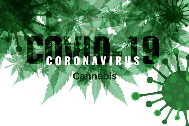 la marihuana y el coronavirus