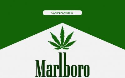 Los cigarrillos de Marihuana de Marlboro